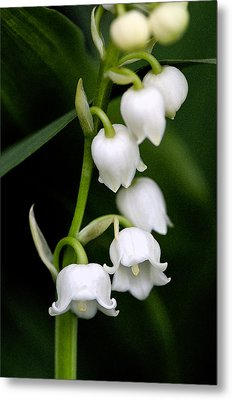 Lily Of The Valley Metal Print by Bobbi Smith