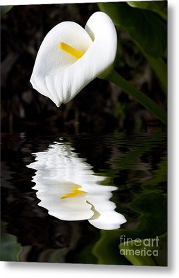 Lily Reflection Metal Print by Avalon Fine Art Photography