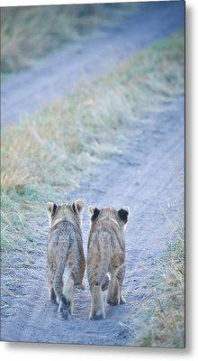 Lion Cubs Walking Together In Masai Mara Metal Print by Mehmed Zelkovic