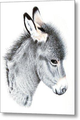 Little Donkey Metal Print by Sandra Moore