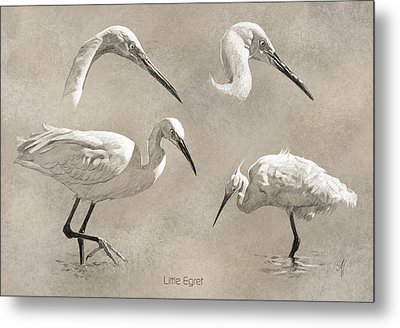 Little Egret Metal Print by Arie Van der Wijst