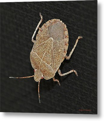 Little Stinker Metal Print by DigiArt Diaries by Vicky B Fuller