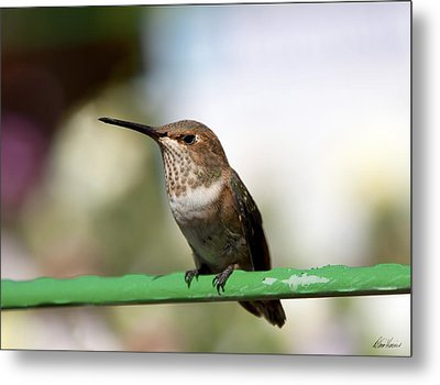 Little Visitor Metal Print by Diana Haronis