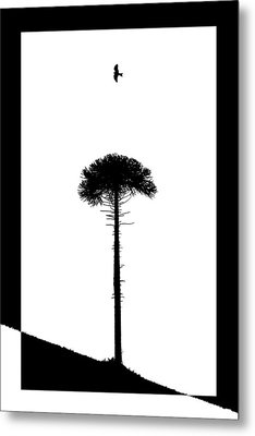Lone Tree Metal Print by Adam Smith