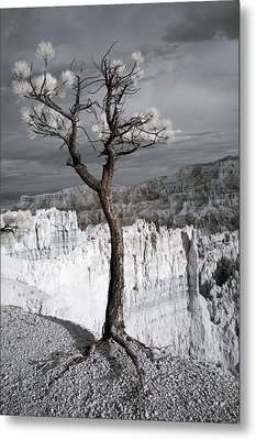 Lone Tree Canyon Metal Print by Mike Irwin