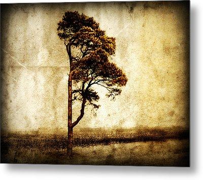 Lone Tree Metal Print by Julie Hamilton