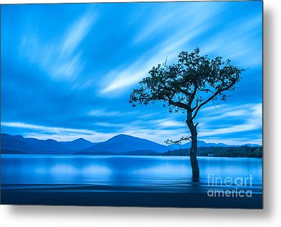 Lone Tree Milarrochy Bay Metal Print by Janet Burdon
