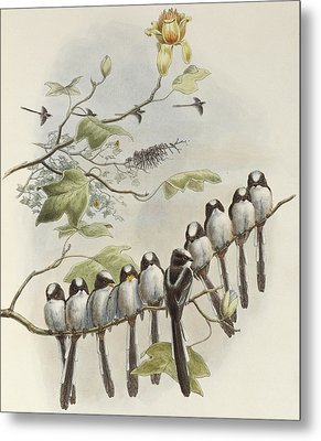 Long-tailed Tit  Metal Print by John Gould