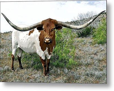Longhorn Bull Of Texas Metal Print by Daniel Hagerman