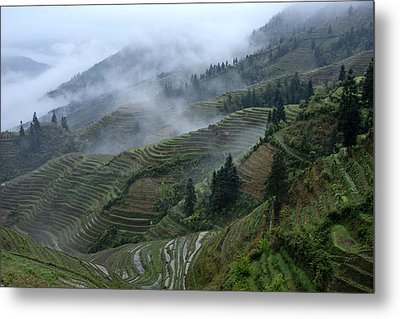 Longsheng Rice Terraces Metal Print by Michele Burgess
