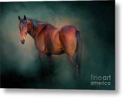 Looking Back Metal Print by Michelle Wrighton