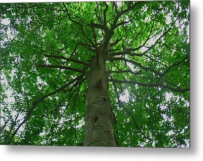 Looking Up Metal Print by Aimee L Maher Photography and Art Visit ALMGallerydotcom