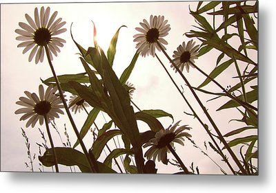 Looking Up Metal Print by Amy Tyler