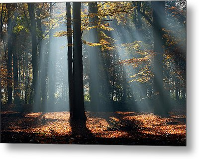 Lost In The Light Metal Print by Roeselien Raimond