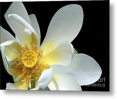 Lotus From Above Metal Print by Sabrina L Ryan