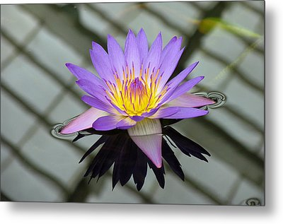 Lotus Metal Print by Vari Buendia