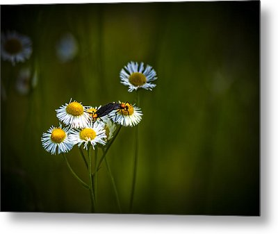 Love Bugs Metal Print by Marvin Spates