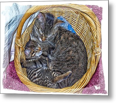 Love In A Hand  Basket  Metal Print by Constantine Gregory