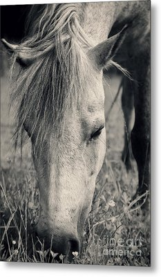 Lulu The Welsh Pony Bw Metal Print by Angela Doelling AD DESIGN Photo and PhotoArt