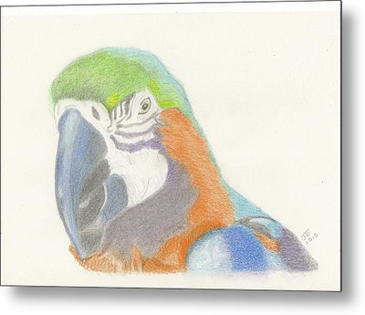 Macaw Metal Print by Jacqueline Essex