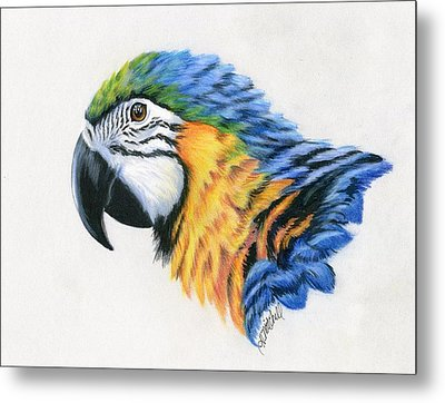 Macaw Study Metal Print by Heather Mitchell