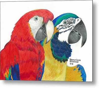 Macaws In Living Color Metal Print by Sharon Blanchard