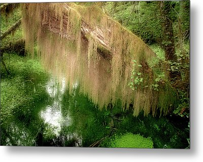 Magical Hall Of Mosses - Hoh Rain Forest Olympic National Park Wa Usa Metal Print by Christine Till