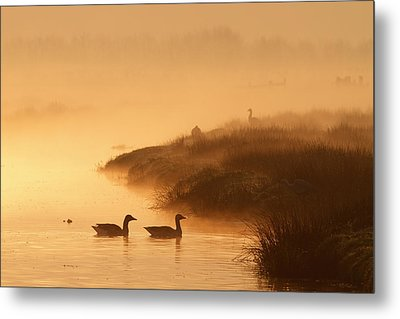 Magical Misty  Morning Metal Print by Roeselien Raimond