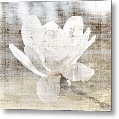 Magnolia Flower Metal Print by Elena Elisseeva
