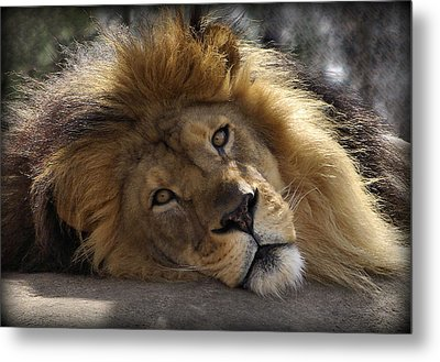 Majestic Love Metal Print by Linda Mishler