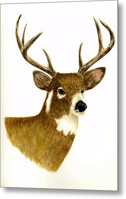 Male Deer Metal Print by Michael Vigliotti
