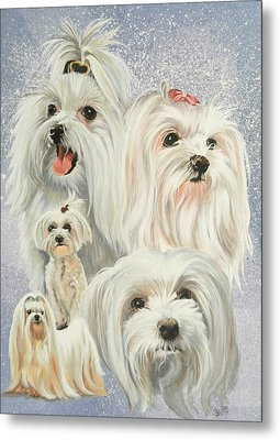 Maltese Collage Metal Print by Barbara Keith