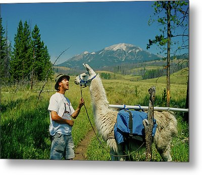 Man Teasing A Llama Metal Print by Jerry Voss