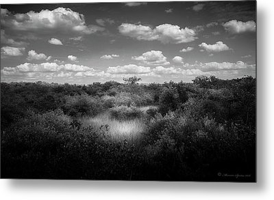 Mangrove Clearing Metal Print by Marvin Spates