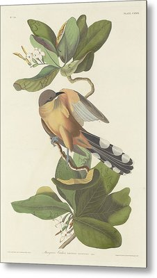 Mangrove Cuckoo Metal Print by John James Audubon