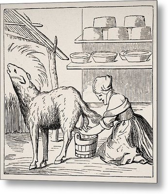 Manufacture Of Cheeses In Switzerland Metal Print by Vintage Design Pics