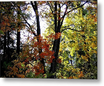 Maple Mania 16 Metal Print by Will Borden
