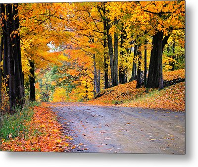 Maples Of Rupert Vermont Metal Print by Thomas Schoeller