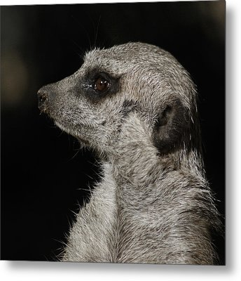 Meerkat Profile Metal Print by Ernie Echols
