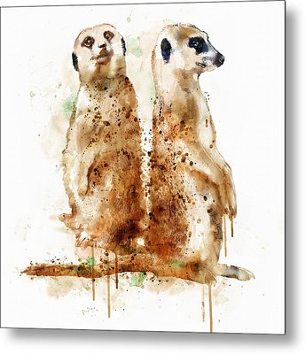 Meerkats Metal Print by Marian Voicu