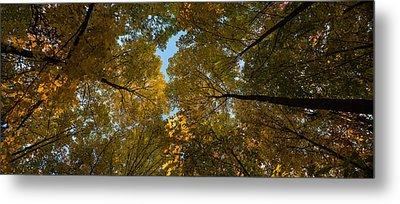 Midwest Forest Canopy Metal Print by Steve Gadomski