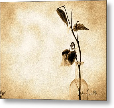 Milk Weed In A Bottle Metal Print by Bob Orsillo