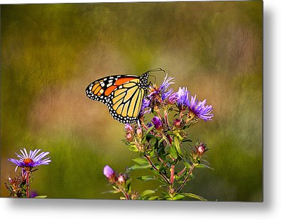 Monarch Butterfly In The Afternoon Sun Metal Print by James Steele