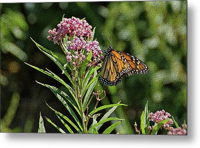 Monarch On Milkweed Metal Print by Sandy Keeton