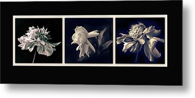 Moonglow Triptych Metal Print by Jessica Jenney