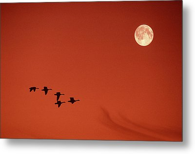 Moonset Metal Print by Tony Beck