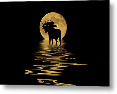 Moose In The Moonlight Metal Print by Shane Bechler