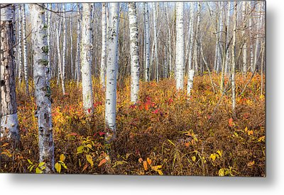 More To The Under-story Metal Print by Mary Amerman