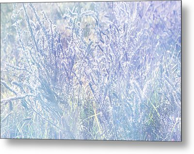 Morning Blues Of Wild Flowers Metal Print by Jenny Rainbow