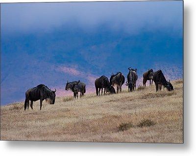 Morning In Ngorongoro Crater Metal Print by Adam Romanowicz